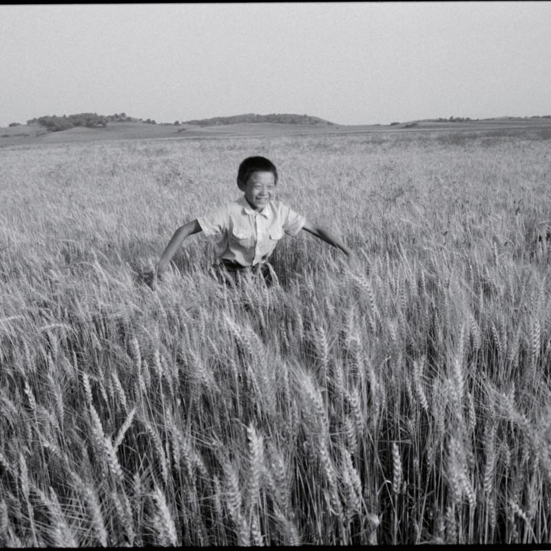 《麦田里的少年,河北》 Boy in the Wheat Fried, Hebei 1997