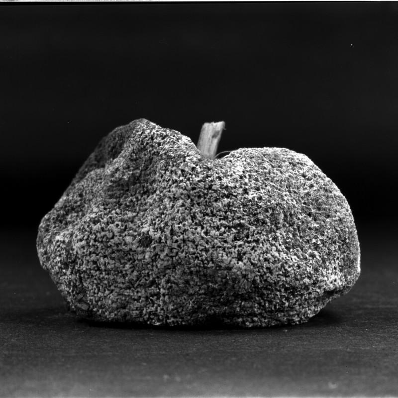 《物非物——果实 04》 Material/Immaterial - Fruit 04 2010