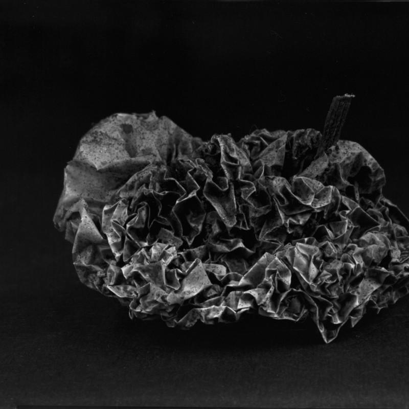 《物非物——果实 05》 Material/Immaterial - Fruit 05 2010