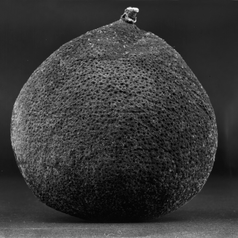 《物非物——果实 07》 Material/Immaterial - Fruit 07 2010