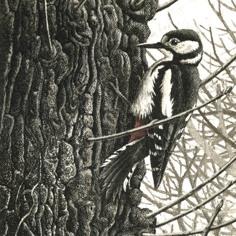 Andrew Stock RE - Spotted Woodpecker