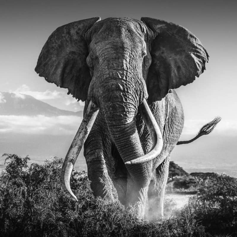Artwork image: DAVID YARROW Africa