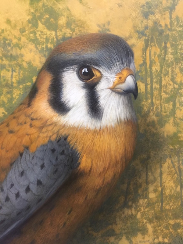 Tom Palmore, Kestrel