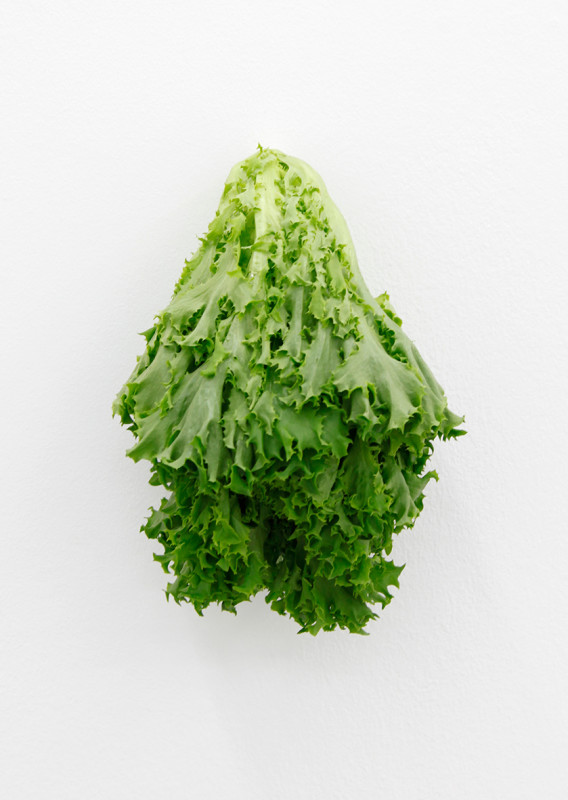 KARIN SANDER, Lettuce (Kitchen Pieces), 2011 / 2016