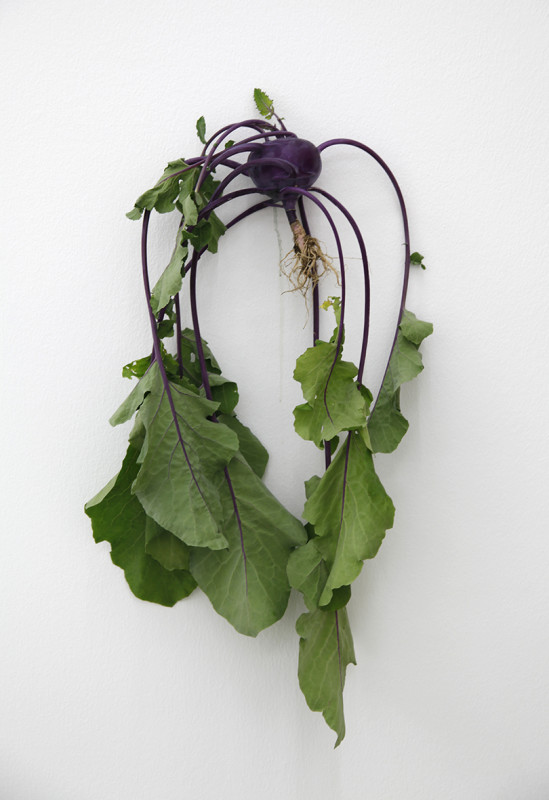 KARIN SANDER, Kohlrabi (Kitchen Pieces), 2011 / 2016
