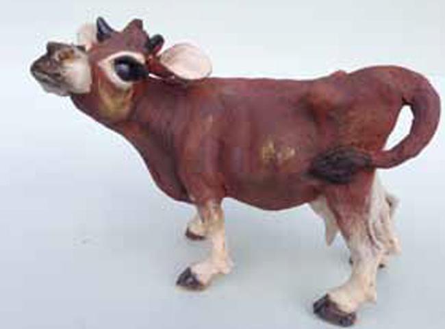 Chris Cummings, Medium Jersey cow