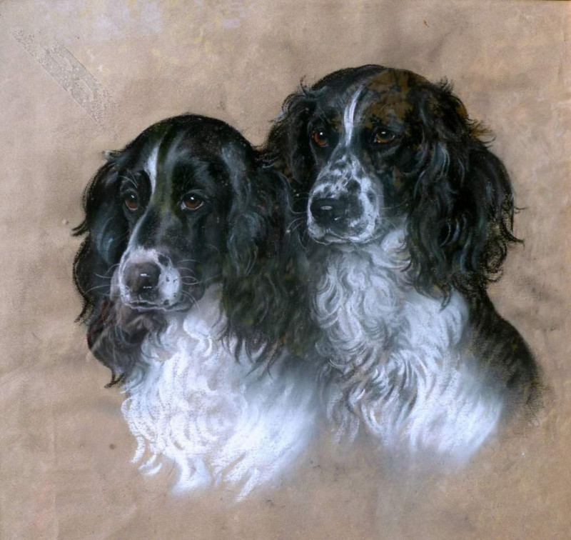 Marjorie Cox, Swallow and Simeon - two Springer Spaniels