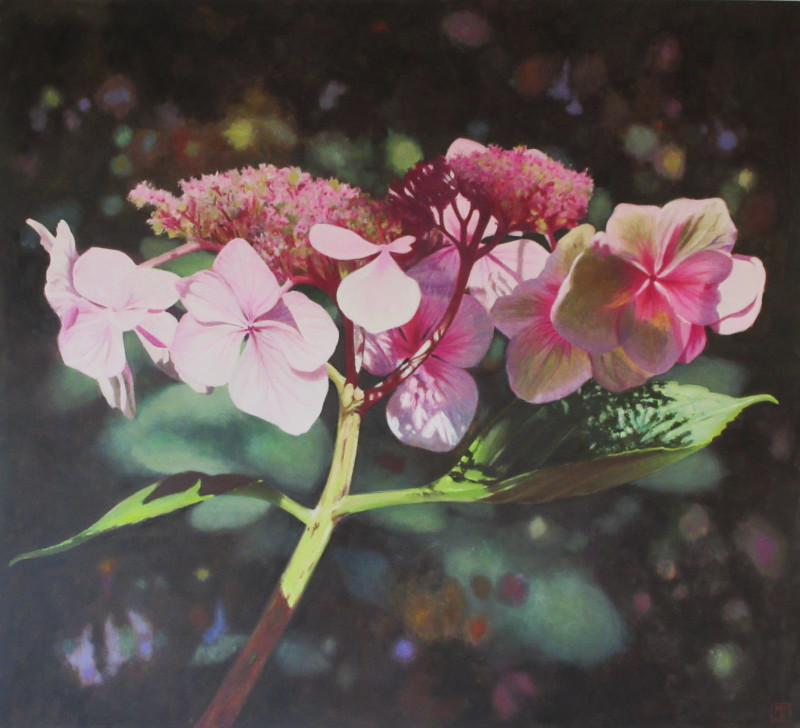 Trish Claridge, Hydrangea