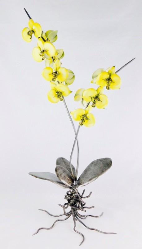 Evans, Lady Godiva Orchid