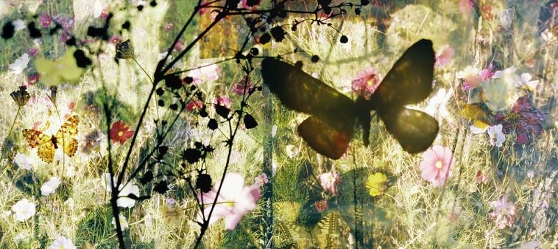 Butterflies - I saved an Admiral's life - 16