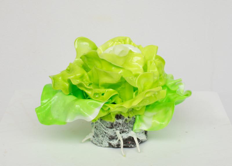 Stefan Gross, Lettuce small, 2019