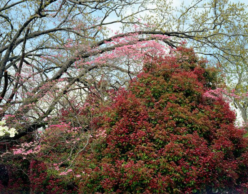 My 33rd Spring, #6, 2003