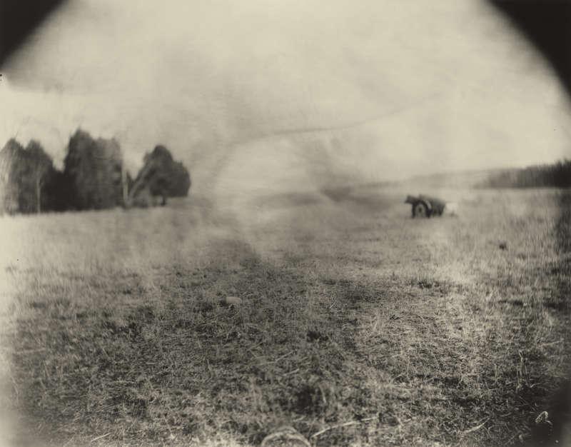 Georgia, Untitled (Beaver Log), 1996