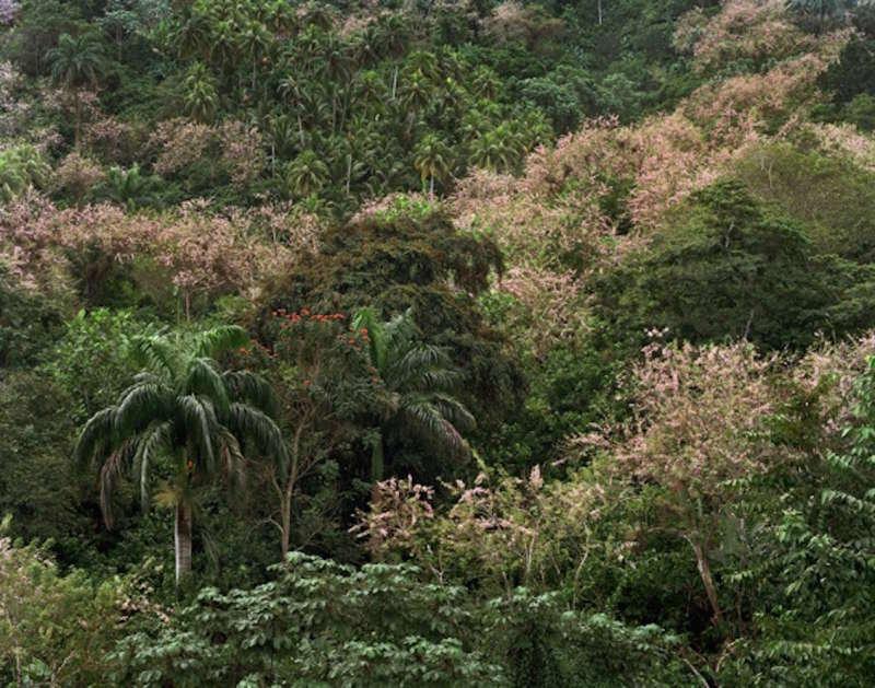 Los campos verdes, 2012