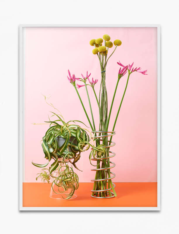 Annette Kelm, Spider Plant, 2020