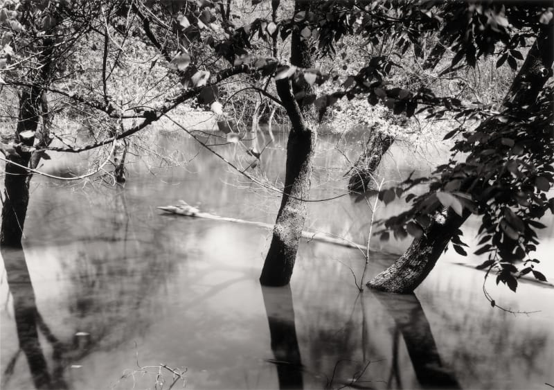 Thomas Joshua Cooper, Drowned Trees along the Mississippi, from the Source to the Sea—Hot Afternoon—Drowning Trees, the Confluence of the...