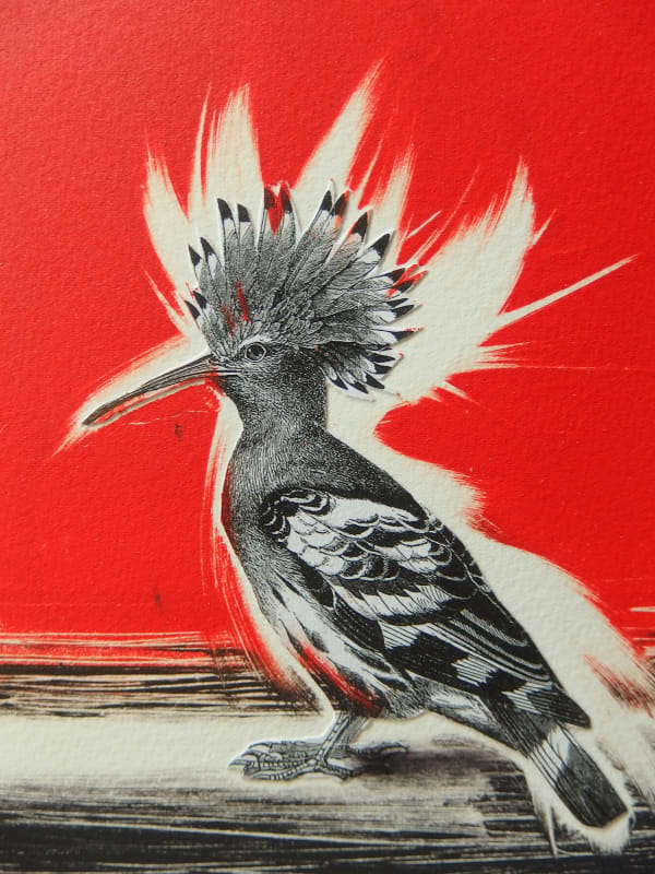Kate Dicker RE, Hoopoe