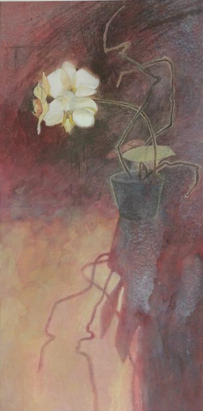 Sarah Holliday RWS, Backlit Orchid