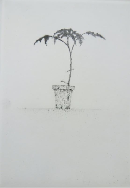 Lars Nyberg RE, Small Plant
