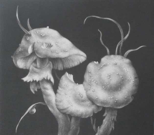 Konstantin Chmutin RE, Fly Agarics