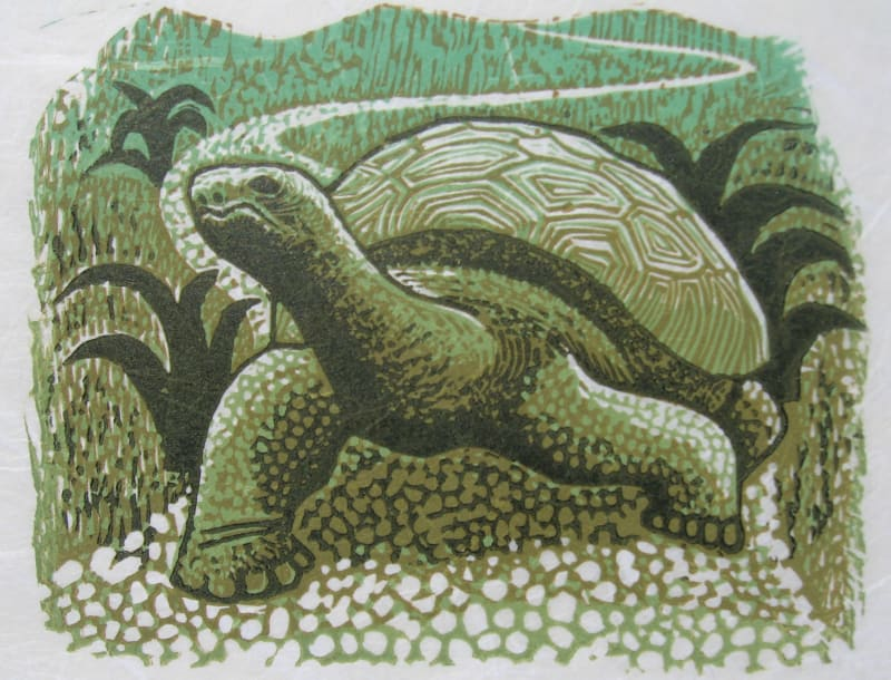 Jim Anderson RE, Galapagos Tortoise