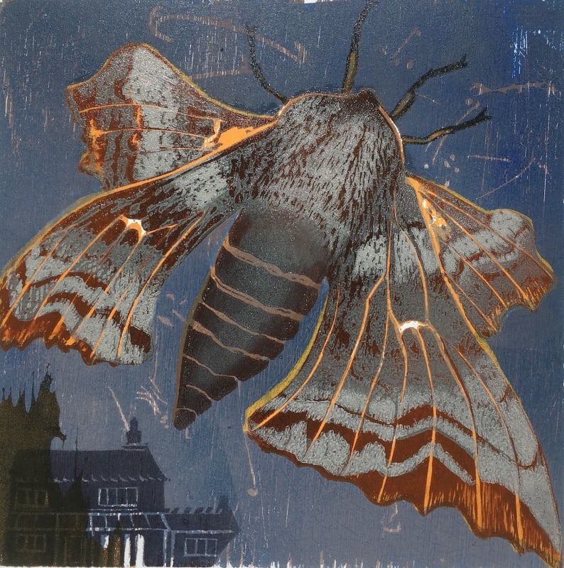 Julia Manning RE, My Garden Moths, Poplar Hawkmoth