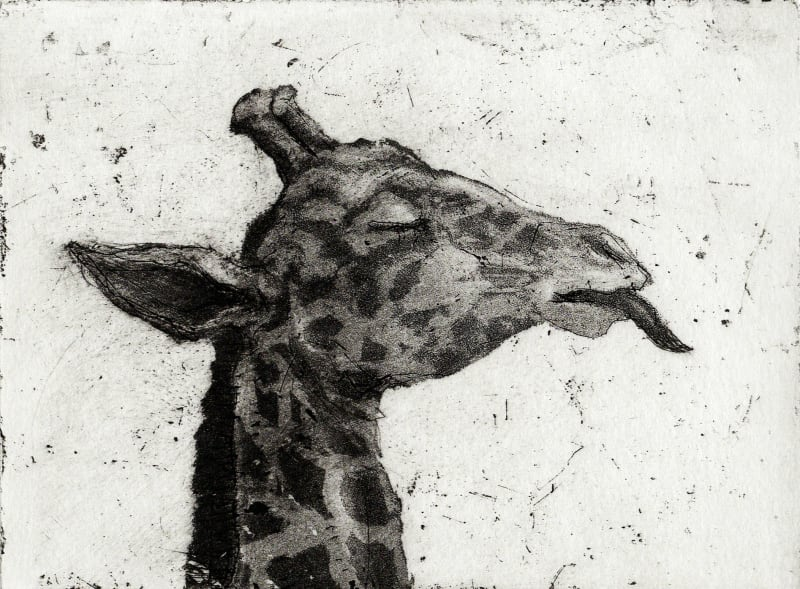 Chris Salmon RE, Giraffe