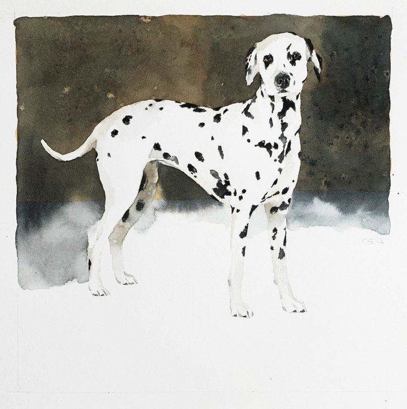 September Vhay, Zoey (Dalmation)