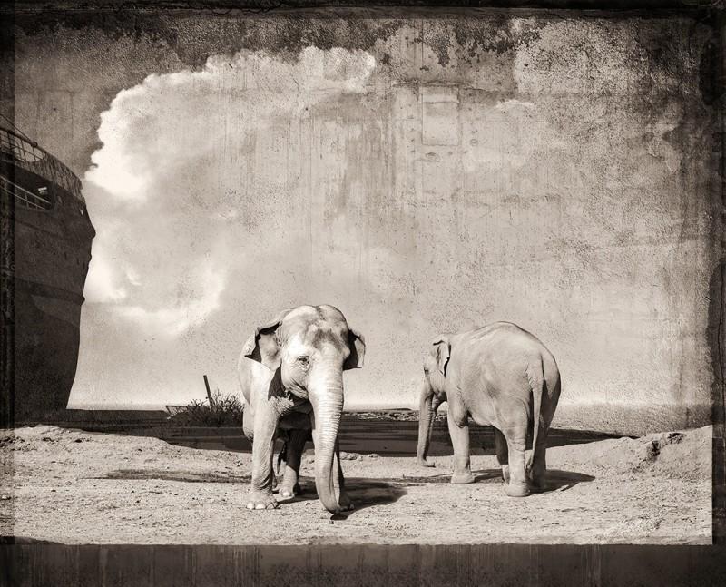 ELEPHANTS AT A WRECK