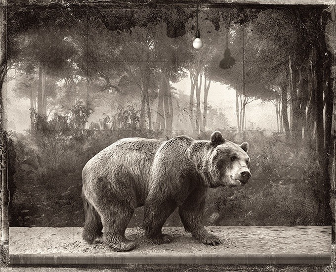BROWN BEAR, 2015