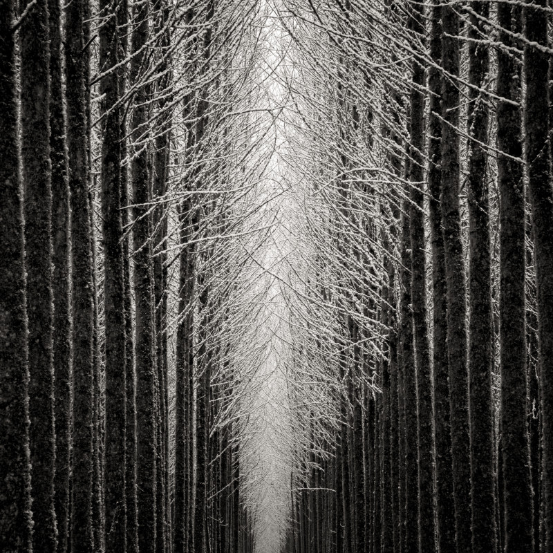 TREE CATHEDRAL, OREGON, 2007