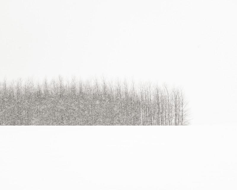 TREES IN BLIZZARD, OREGON, 2014