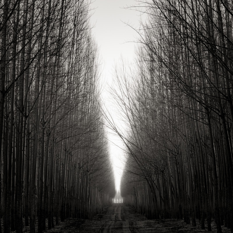 ROAD WITH LEANING TREES, OREGON, 2016