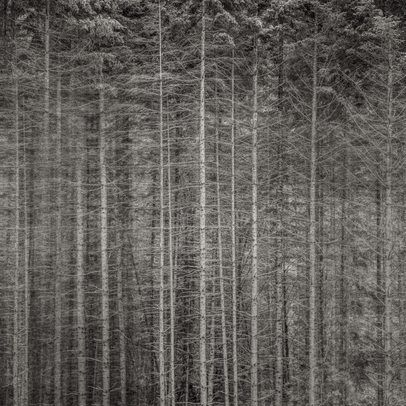 FOREST EDGE, OREGON, 2013