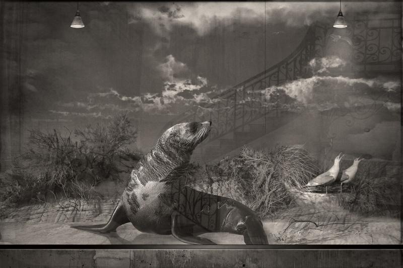 SEAL AND SEAGUL