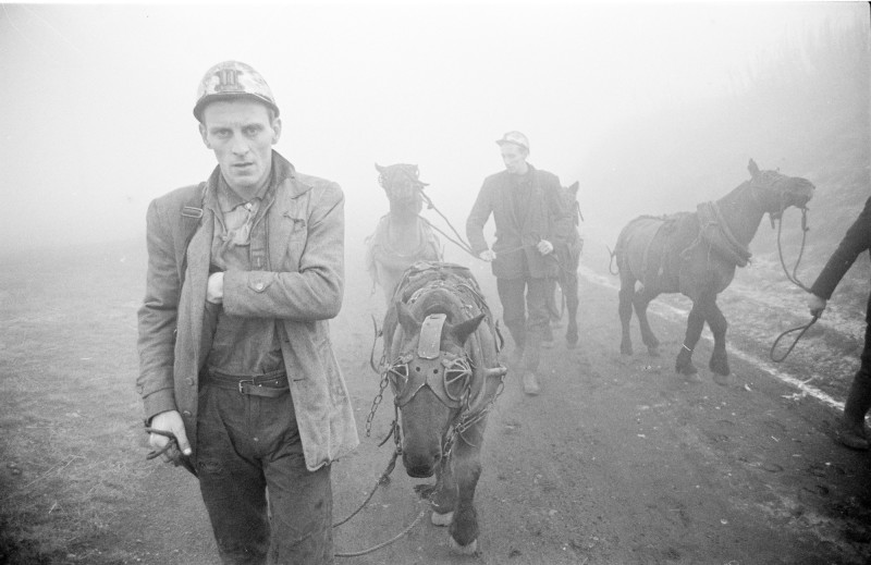 MINERS AND PIT PONIES, COUNTY DURHAM, WINTER, 1964-1965