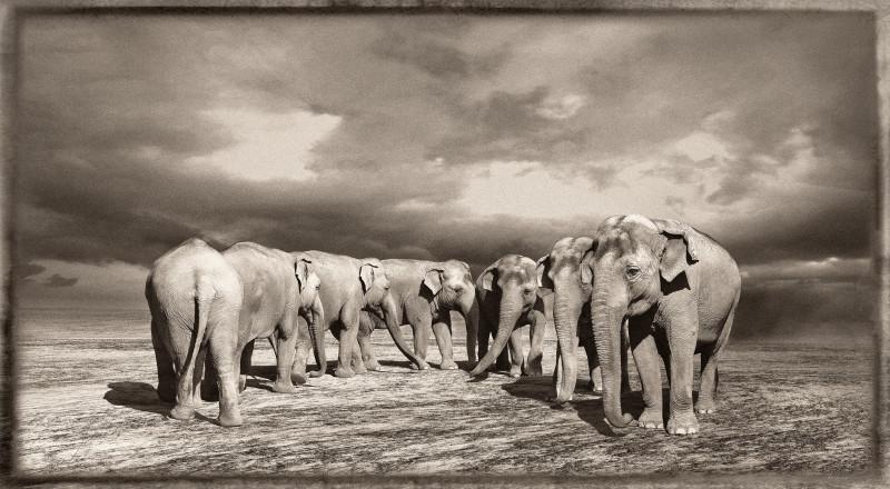ELEPHANT TURN