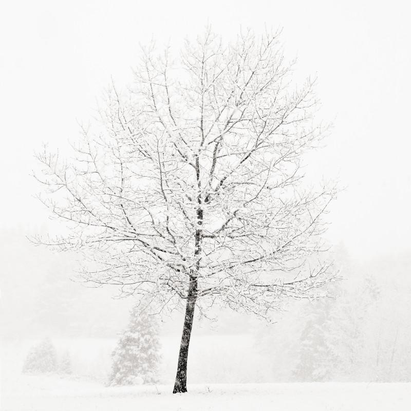 LONE TREE IN SNOW, OREGON, 2007