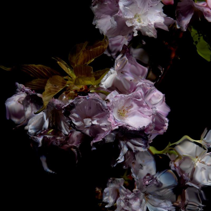 Alexander James Hamilton, Floral Study [0459], 2012