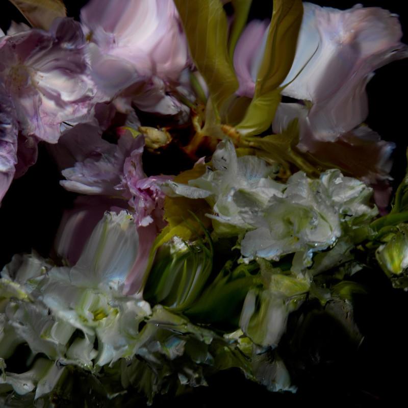 Alexander James Hamilton, Floral Study [0498], 2012