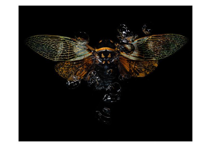 Alexander James Hamilton, Swarm [0524], 2009