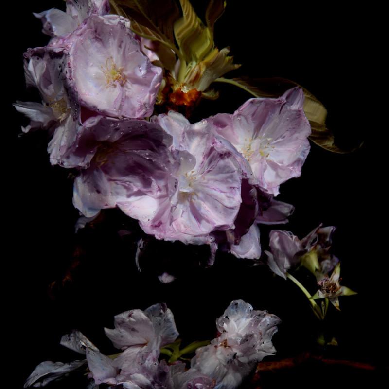 Alexander James Hamilton, Floral Study [0464], 2012