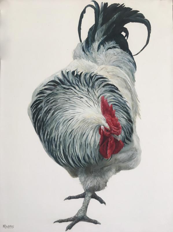 Katie Wilkins, Light Sussex cockerel
