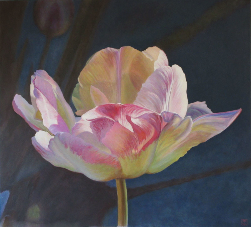 Trish Claridge, Tulip SOLD