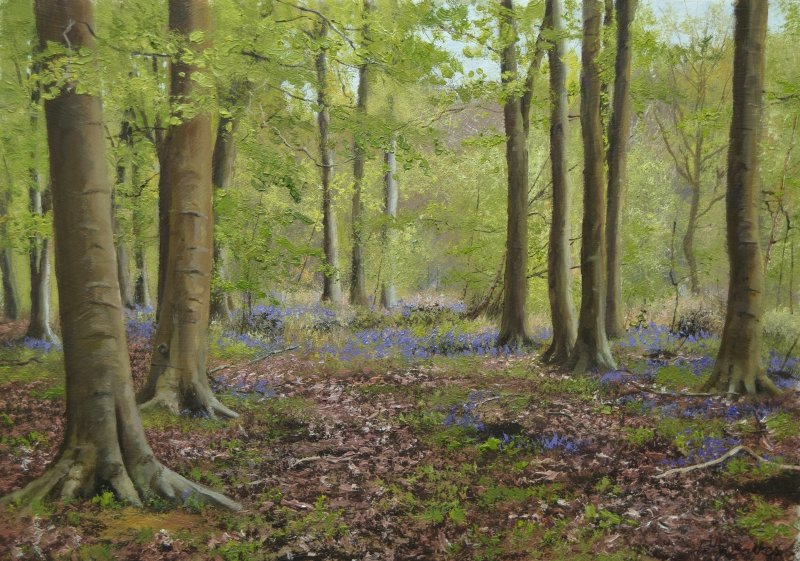 Peter Barker RSMA, Beech Trees in Spring