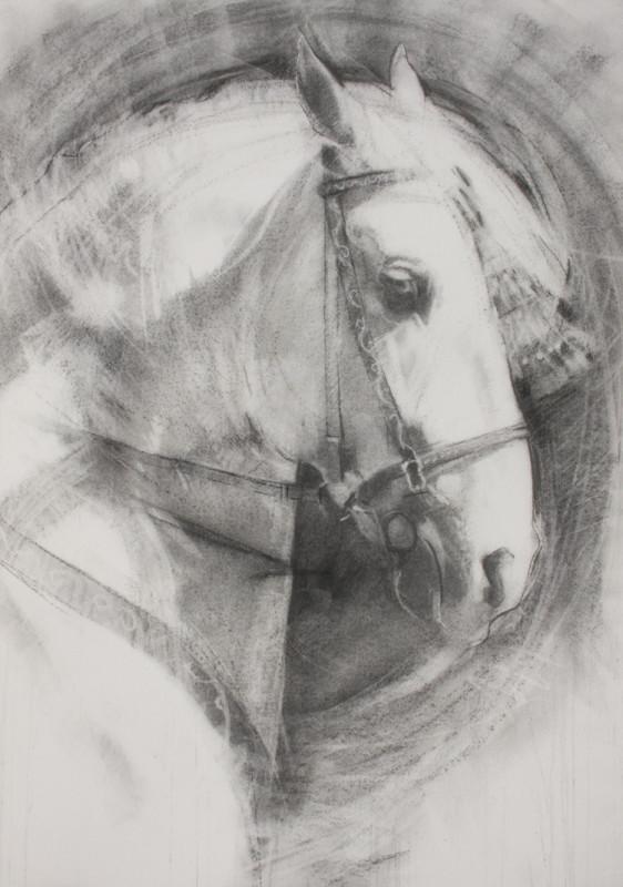 Sally Martin, Grey Andalusian - monochrome