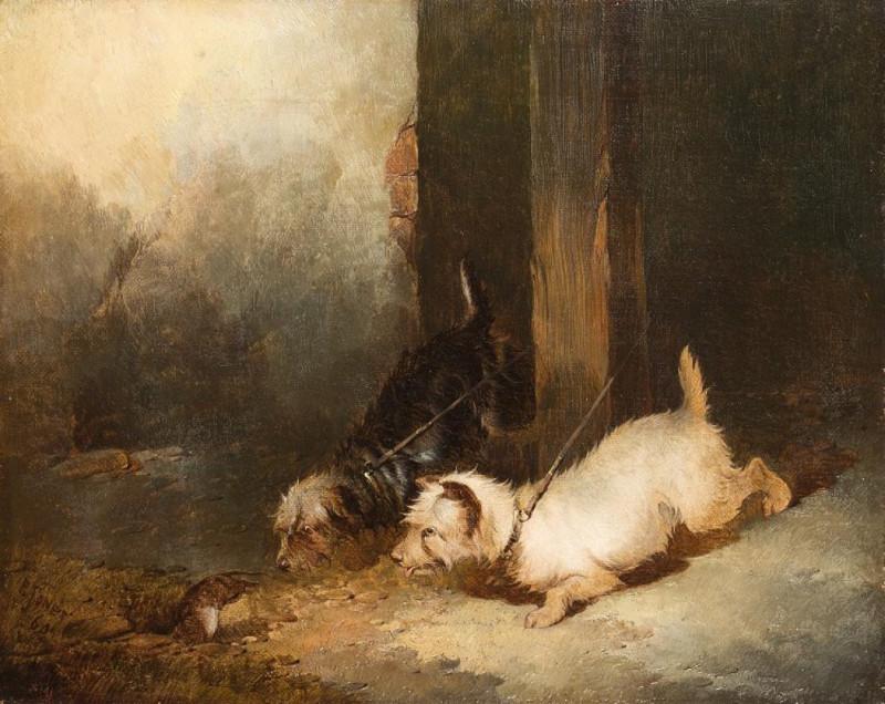 Paul Jones, Terriers Ratting
