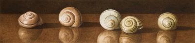 Nigel Ashcroft, Garden shells