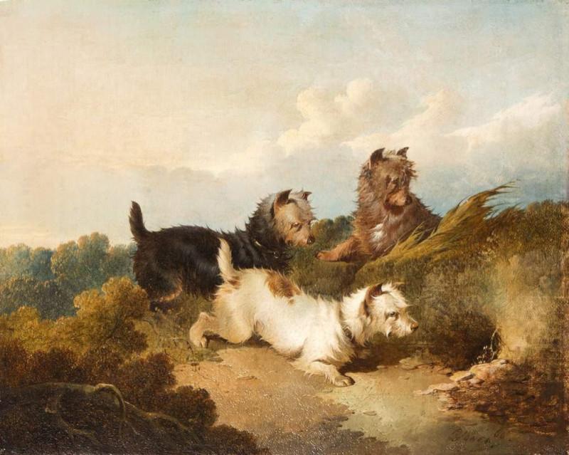 Paul Jones, Sporting Terriers