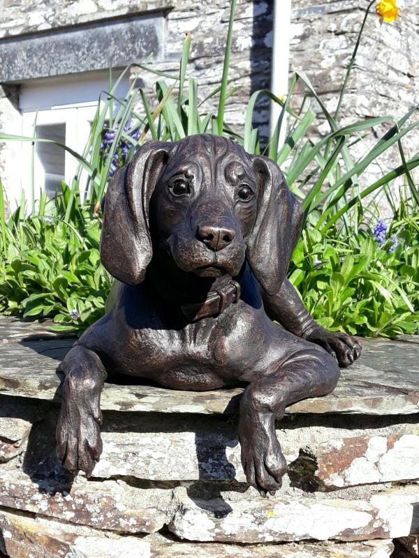 Suzie Marsh ARBS, Cooper - lying Vizsla puppy